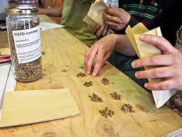 Recuento semillas germinando